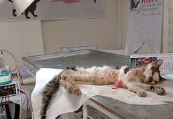Girdiği araç motorunda ağır yaralanan kediye tedavi