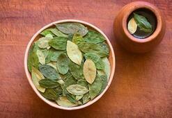 Mate Çayı Nasıl Demlenir Mate Yaprağı Çayı Nasıl Yapılır, Nasıl Tüketilir