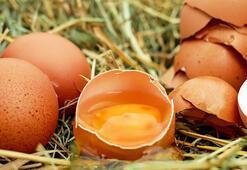 Yumurtanın Saça Faydaları Nelerdir Yumurtalı Saç Maskesi Saça İyi Gelir Mi