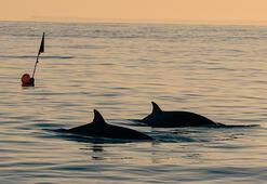Meksikada yeni bir balina türü keşfedildi