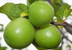 Yeşil Elmanın Faydaları Nelerdir Yeşil Ekşi Elma Yemek Ne İşe Yarar