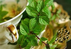 Bitki Çaylarının Faydaları Nelerdir Hangi Bitki Çayı Neye İyi Gelir