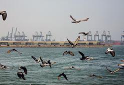 Suudi Arabistanda petrol tankerinde patlama
