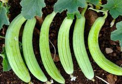 Acurun Faydaları Nelerdir Acur Meyvesinin Cilde Olan Yararları