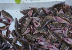 Dışı zehirli balık Kilosu 80 lira...