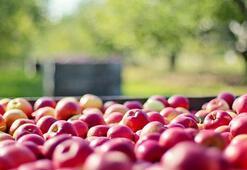 Elma Pekmezinin Faydaları Nelerdir Elma Pekmezi Nasıl Yapılır