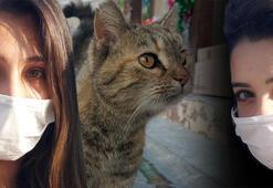 Kediler bir anda ortadan kaybolmaya başladı 21 Aralık uyarısı...