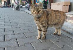 Son dakika... Sokak kedilerinin kaybolduğu şehirde satanist paniği Ayin için sürekli telefon açıyorlar