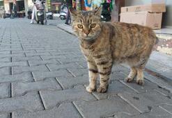 Sokak kedilerinin kaybolduğu şehirde satanist paniği Ayin için sürekli telefon açıyorlar
