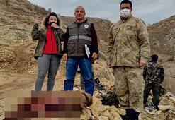 Koruma altındaki yaban keçisi avına 30 bin lira ceza