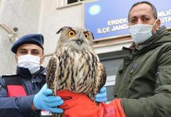 Uçamayan puhu kuşuna jandarma sahip çıktı