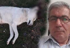 Köpeği vuran avukat serbest kaldı