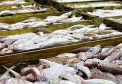 FAO: Akdeniz ve Karadenizdeki avcılığın 230 bin tonu ıskarta