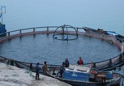 Fırat Nehrinde yetiştirilen somon balıkları dünyaya ihraç ediliyor