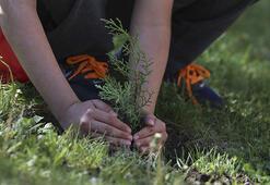 Yılbaşı için ağaç dikme önerisi