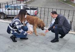 Polisler sokak hayvanlarını besledi