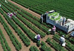 Bitkisel üretim arttı