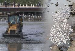 Tonlarca ölü balık topladılar