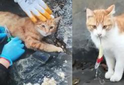 Sahillerde bırakılan misinalar, olta uçları kedilerin ölümüne yol açıyor