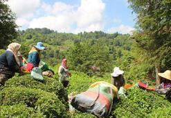 Salgın döneminde çay satışı arttı