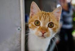 Ankarada belediye bakımevinde 20 kediye ötanazi iddiası
