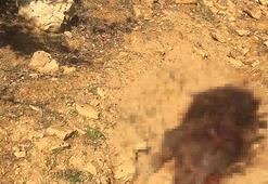 Domuz avında tüfekle vuruldu 3 arkadaşı gözaltına alındı