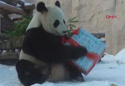 Hayvanat bahçesinde hayvanlara yeni yıl sürprizi