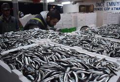 Hamsi bolluğu Balıkçılar büyük sevinç yaşadı