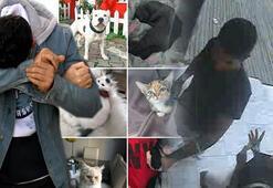 Kedi ve köpek fotoğraflarıyla akılalmaz vurgun 5 ayda 69 bin