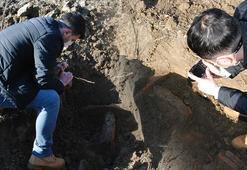 Bahçesinde kazı yaparken buldu Hemen haber verdi