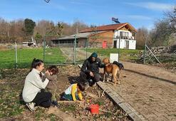Şehir hayatından sıkılıp köyde tarım ve hayvancılık yapmaya başladılar