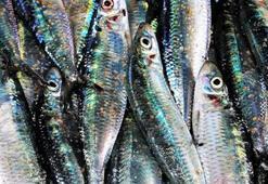 D vitamini en çok bu balıkta var Bağışıklığı yükseltiyor