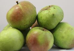 Yomra elması coğrafi işaret tescil belgesi aldı