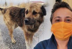 Kısırlaştırmaya götürülen köpeğin dili koptu