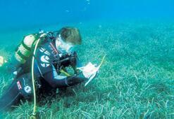 Denizlerin ormanına BM destekli koruma