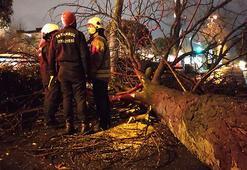 İstanbulda fırtına Asırlık çınar ağacı devrildi