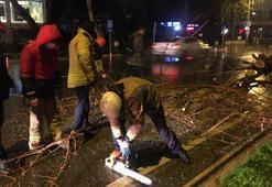 Bağdat Caddesinde şiddetli sağanak ve rüzgar nedeniyle ağaç devrildi