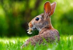 Tavşanlar hakkında 10 ilginç bilgi