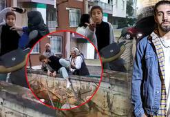 Sokak hayvanlarını besleyen üniversite öğrencisine saldırı