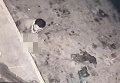 Sakaryada iğrenç haber Köpeğe taciz mide bulandırdı
