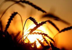 Rusya, 2020de 29,4 milyar dolarlık tarım ihracatı yaptı
