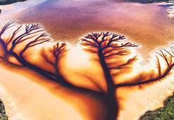 Doğanın 'hayat ağacı'