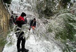 Son dakika... Düzceden sonra İstanbulda da bir ağaç aracın üzerine devrildi
