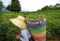 Türk çayını 2020de en çok Belçika talep etti