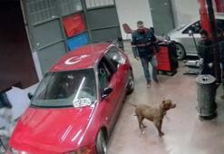 Tamirhaneye giren pitbull panik yarattı