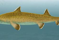 Almanyada 150 milyon yıllık köpek balığı fosili keşfedildi