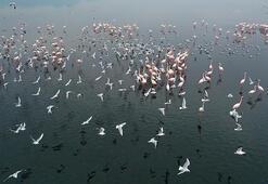 Gediz Deltasında kış kuşları kayıt altına alınıyor