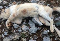 Son dakika... Muğlada isyan ettiren olay Köpeğini çok yemek yiyor diye öldürdü