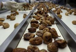 Çin'e kuru meyve ihracatı arttı