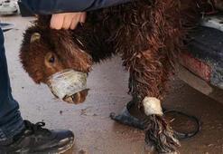 Sınırda şaşırtan olay Far ve akaryakıt deposunda 4 kuzu